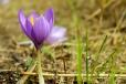 Fleurs_Couleur 307