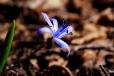 Fleurs_Couleur 309