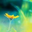 Fleurs_Couleur 310