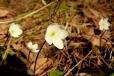 Fleurs_Couleur 312