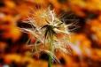 Fleurs_Couleur 314