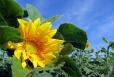 Fleurs_Couleur 315