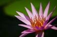 Fleurs_Couleur 324