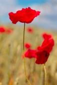 Fleurs_Couleur 328_1