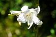 Fleurs_Couleur 331_1