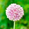 Fleurs_Couleur 334
