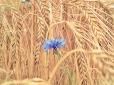 Fleurs_Couleur 338_1