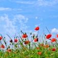 Fleurs_Couleur 339