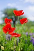 Fleurs_Couleur 343_1