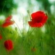 Fleurs_Couleur 345