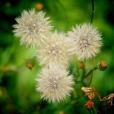 Fleurs_Couleur 347_1