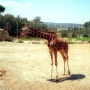 girafe_001_1