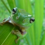 Grenouille_006_1
