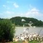 ibis_002_1