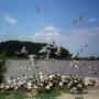 ibis_003_1