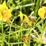 Insectes_Couleur 002