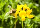 Insectes_Couleur 004