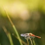 Insectes_Couleur 005
