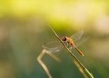 Insectes_Couleur 007