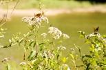 Insectes_Couleur 010