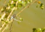 Insectes_Couleur 011