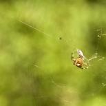 Insectes_Couleur 014