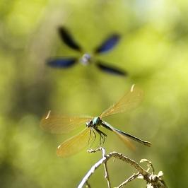 Insectes_Couleur 016