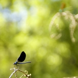 Insectes_Couleur 017