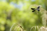 Insectes_Couleur 018
