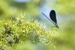 Insectes_Couleur 021