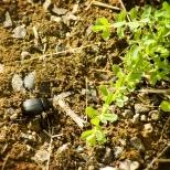 Insectes_Couleur 023