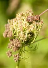 Insectes_Couleur 035