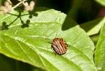 Insectes_Couleur 036