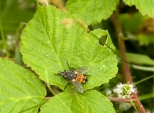Insectes_Couleur 037