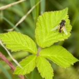 Insectes_Couleur 038