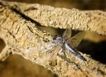 Insectes_Couleur 041