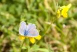 Insectes_Couleur 045
