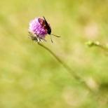 Insectes_Couleur 046