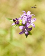 Insectes_Couleur 053