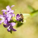 Insectes_Couleur 054