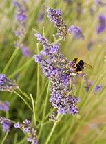 Insectes_Couleur 062