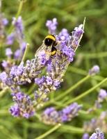 Insectes_Couleur 063