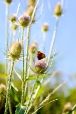 Insectes_Couleur 070_1