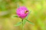 Insectes_Couleur 073_1