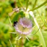 Insectes_Couleur 075_1