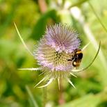 Insectes_Couleur 076_1