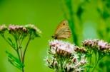 Insectes_Couleur 086_1