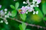 Insectes_Couleur 088_1