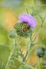 Insectes_Couleur 091_1