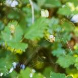 Insectes_Couleur 096